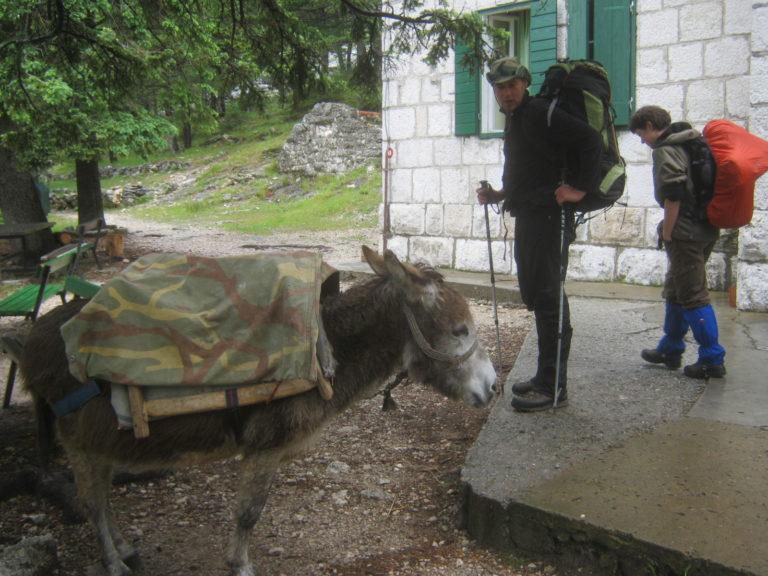Opskrbni magarac Škegro u svom životu prenio je tone materijala...